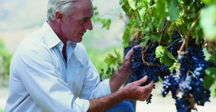 葡萄牙葡萄酒的分級制度